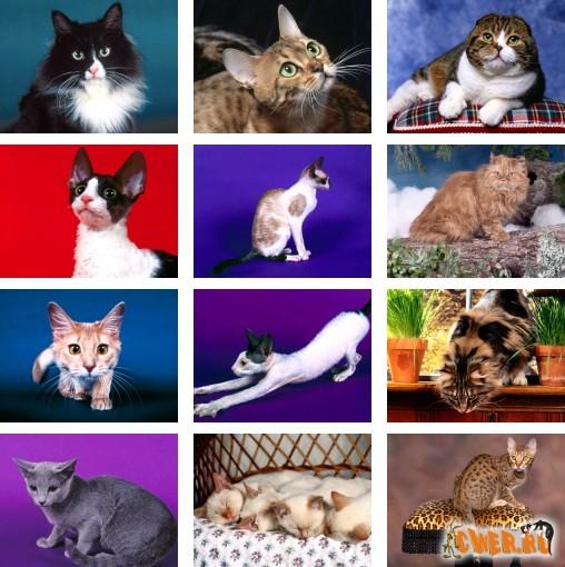 http://www.cwer.ru/files/u165477/Cats_1600x1200_3.jpg