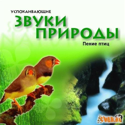 Corciolli звуки природы пение птиц