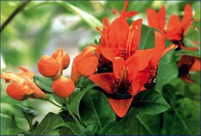 цветущие растения в горшках